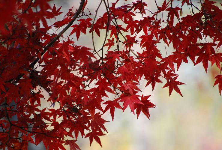 功山寺の紅葉ー1