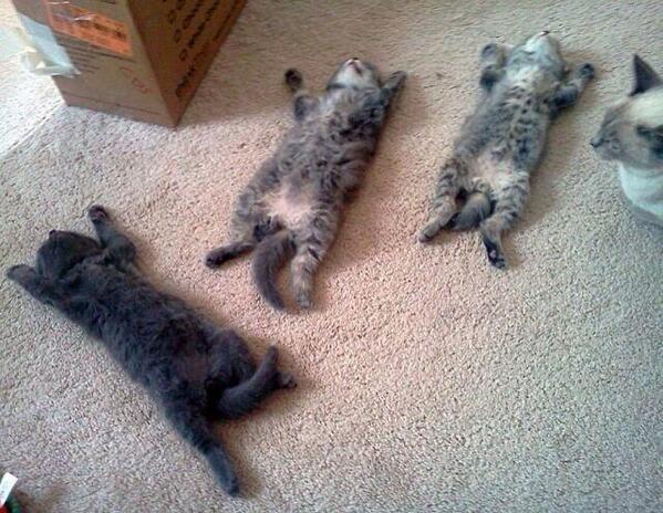 「猫倒れる画像」の画像検索結果