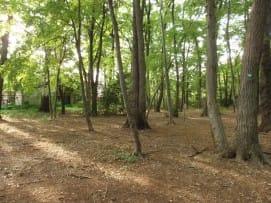 裸地化した独歩の森.JPG