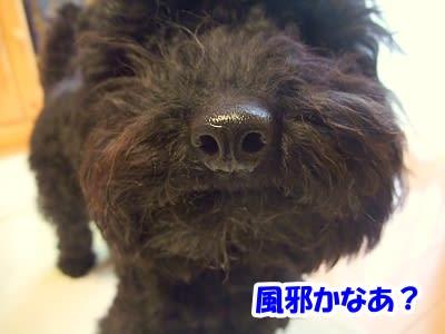 https://blogimg.goo.ne.jp/user_image/59/da/46fde600cb67edba9f25e0e062e3f50a.jpg