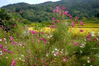 東海自然歩道とも重なり、四季の草花や景色も美しい