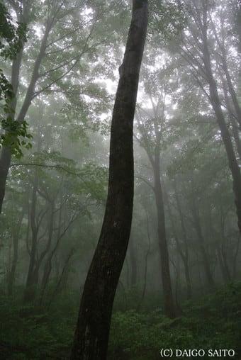 木々の輪郭