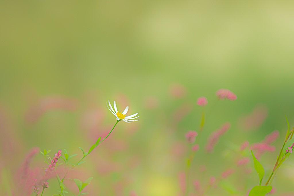 秋の野花の写真