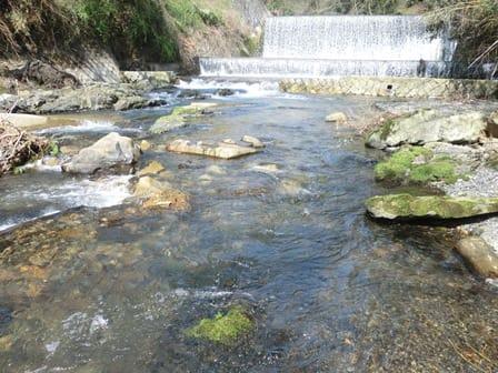 渓流 釣り 京都