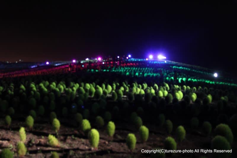 ひたち 海浜 公園 コキア ライト アップ