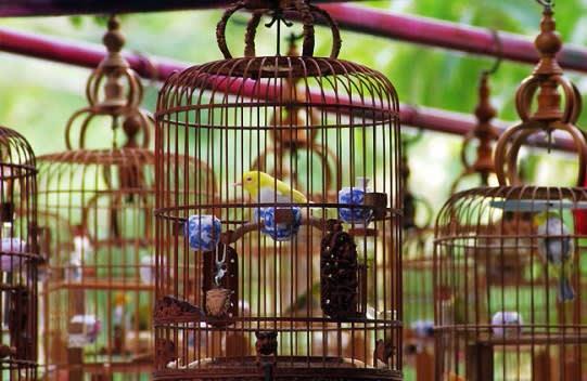 Cara Membuat Kandang Burung Puter - Tentang Kolam Kandang ...