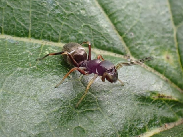 アリ の 数 を かぞえ て