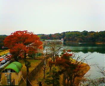 狭山湖 多摩湖 紅葉
