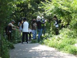 屈強な男性陣による伐った枝の処理