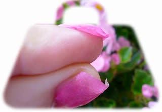 花びらの爪