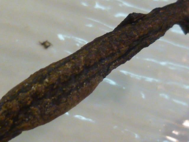 イモリ の 黒焼き