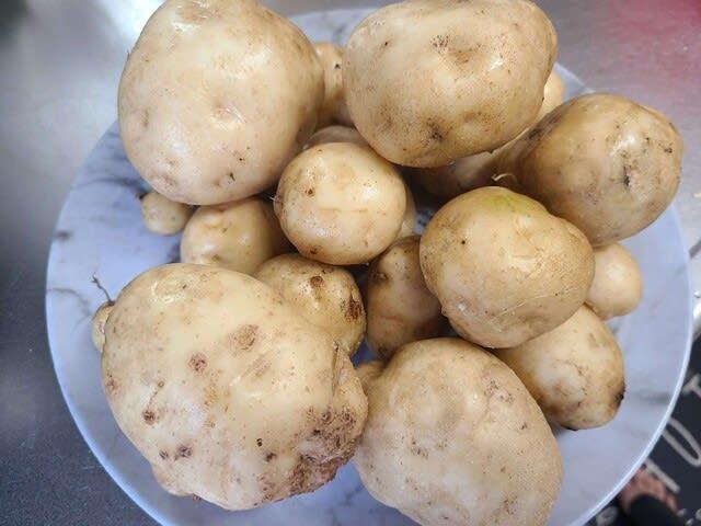 ジャガイモの写真です