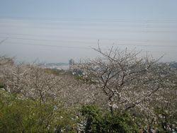 塚山公園さくら祭