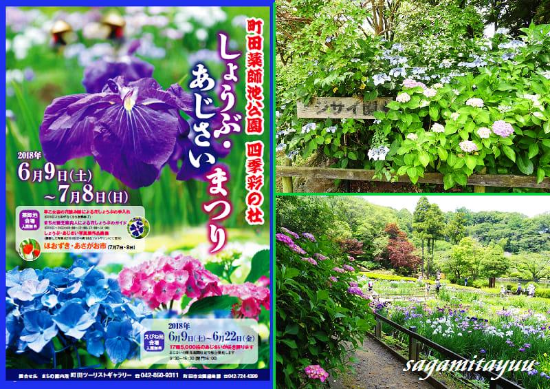 町田薬師池公園しょうぶあじさいまつり 2018前の花姿 相模