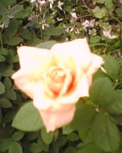 2008_0928_778