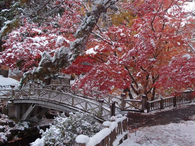 11月9日園内風景(2)