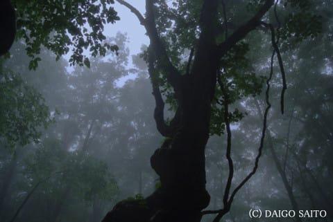 森に秘する力