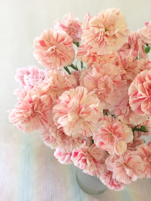 昨日の無印良品有楽町でのトークショーで話題となった切り花長保ち剤。 「母の日の花、まだ綺麗ですよ」とお話しましたが今日もまだまだ綺麗でした。