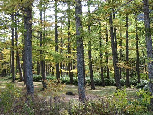 木立が美しい