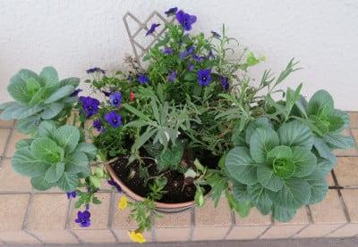 寄せ植え鉢-F
