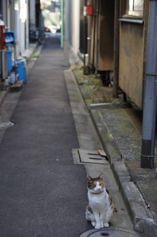 Tokyo131215
