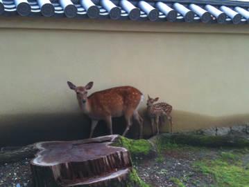 の バンビ 小鹿 子鹿のバンビ
