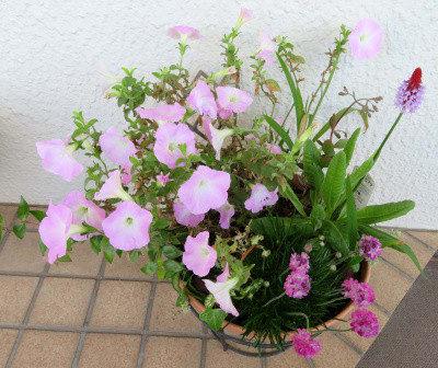 寄せ植え鉢-L 2021/04/15