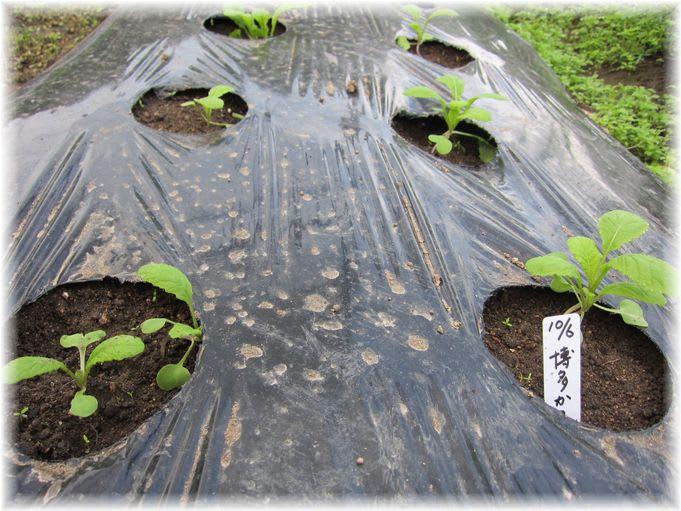 博多かつを菜 2010年10月29日