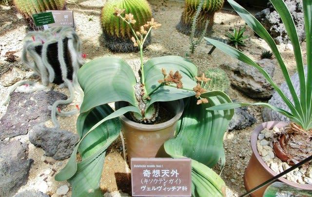 植物 奇想 天外