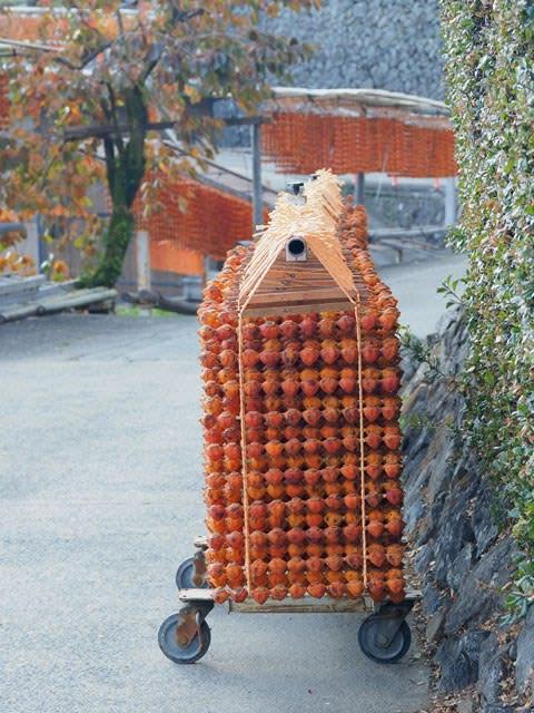 串柿を干す