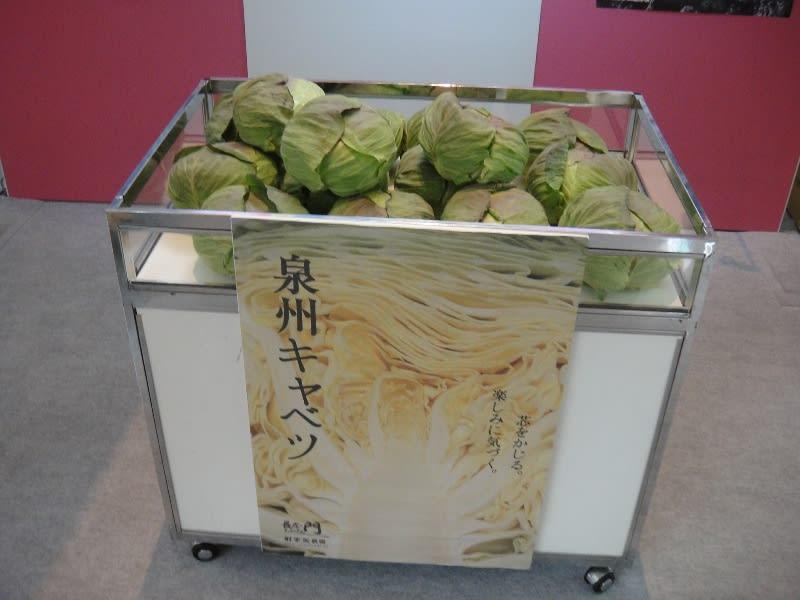 羽田空港のキャベツ