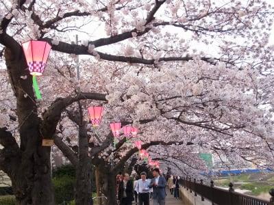 姥桜 - ななのきもち