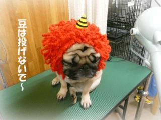 犬ヅラ日和