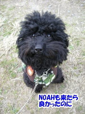 https://blogimg.goo.ne.jp/user_image/5f/b6/92d8746b6f89fcdd9b345ac7f80ff79a.jpg