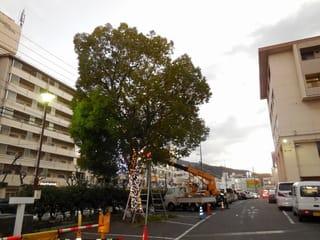 病院内のツリー