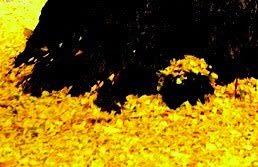 「黄金の枯れ葉作戦」【岩淸水・保管記事】