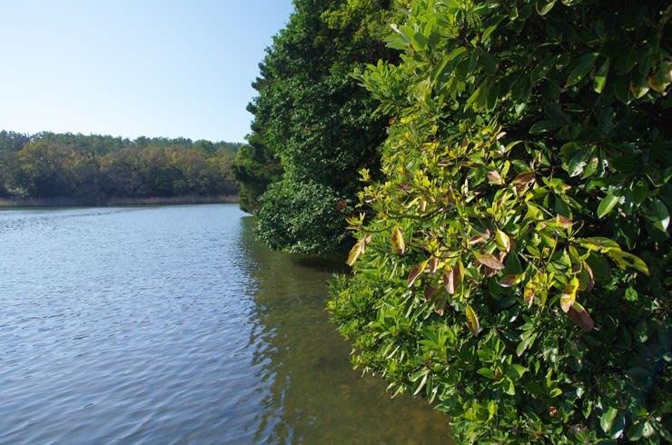 水上デッキから見た鹿島の森