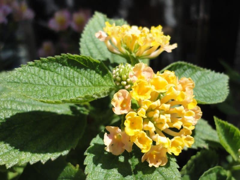 06月16日 黄色い花