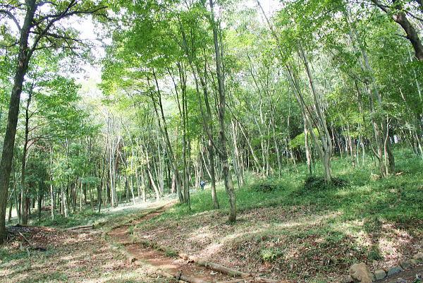 a23452f6d8 この日(9月20日)はまだまだ残暑が残っていましたが、緑豊かな登山道に入ると爽やかな空気が感じられました。