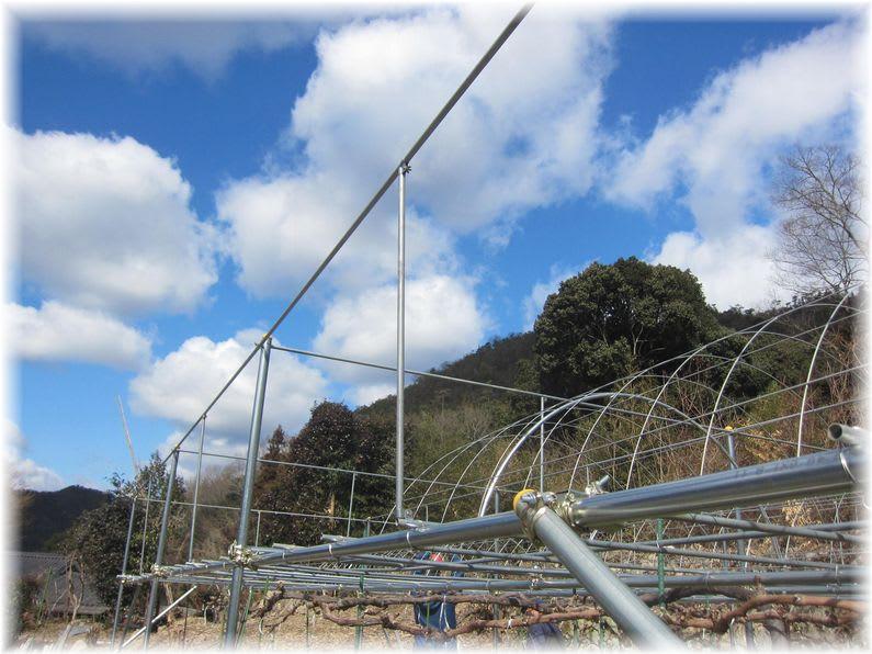 ピオーネの畑改造 2012年2月18日