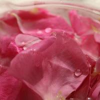 Rose_pink02