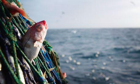 共通漁業政策を廃棄し、無駄をなくそう - memories on the sea 海の記録