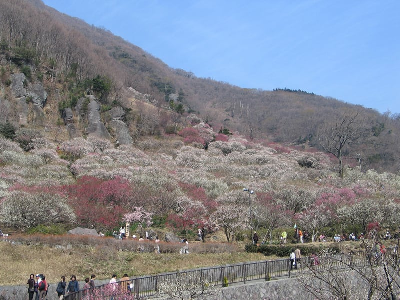 A_makuyamakouen_1416