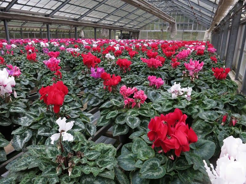 バラの季節・開花時期はいつ?見頃を四季ごとにま …