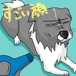 極悪犬 Hayatenoyouni 改め はやっ