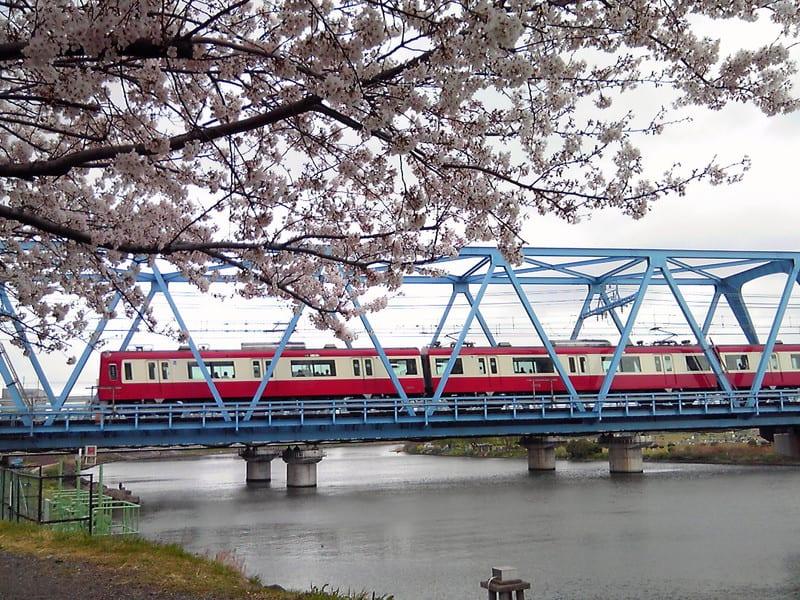 桜が咲いてくれました