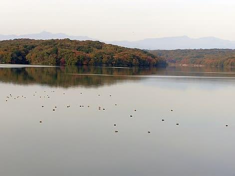 2011多摩湖・狭山湖紅葉情報