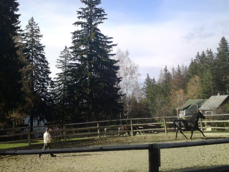 131103_horse05