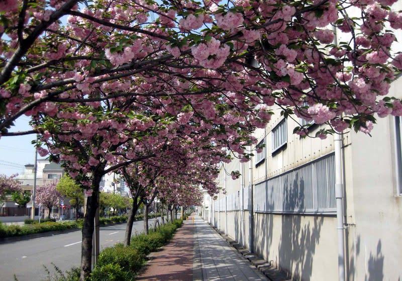 Double_flowering_arcade