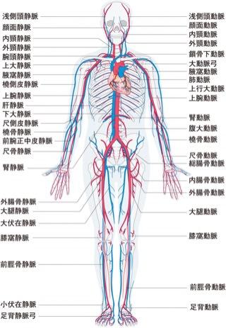 仕事の覚書 『血管 & 血液の働き』 - ばあばの玉手箱